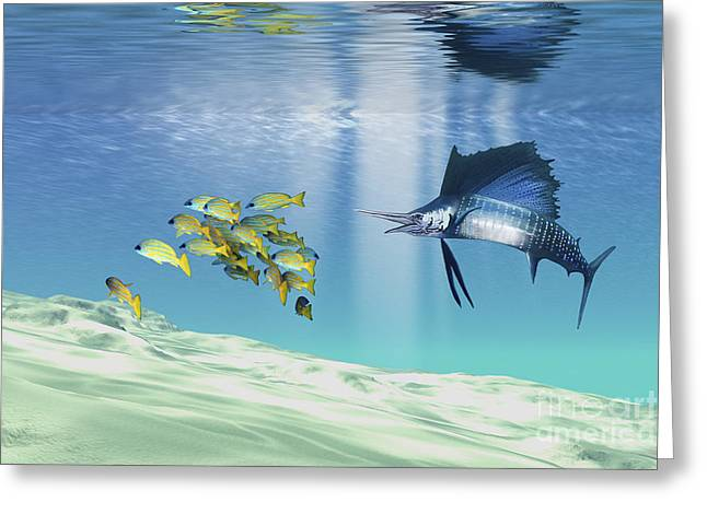 Striped Marlin Greeting Cards - A Sailfish Hunts Prey On A Sandy Reef Greeting Card by Corey Ford