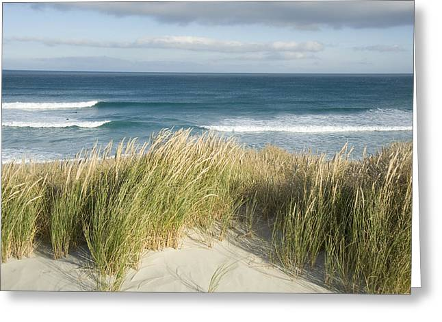 Aotearoa Greeting Cards - A Scenic Hillside Of The Beach Greeting Card by Bill Hatcher