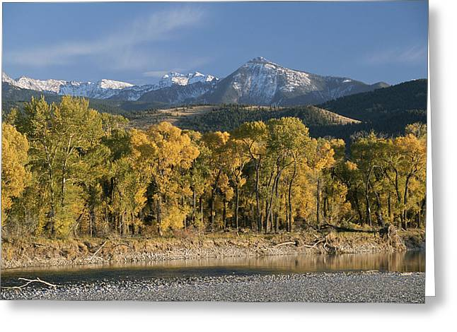 A Scenic View Of The Yellowstone River Greeting Card by Tom Murphy