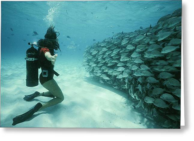A School Of Grunts Swims By A Diver Greeting Card by Nick Caloyianis