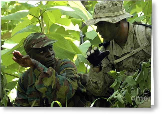 Jungle Warfare Greeting Cards - A Scout Receives Observational Greeting Card by Stocktrek Images