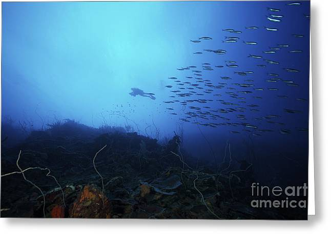 Vittata Greeting Cards - A Scuba Diver Explores A Deep Drop Greeting Card by Terry Moore