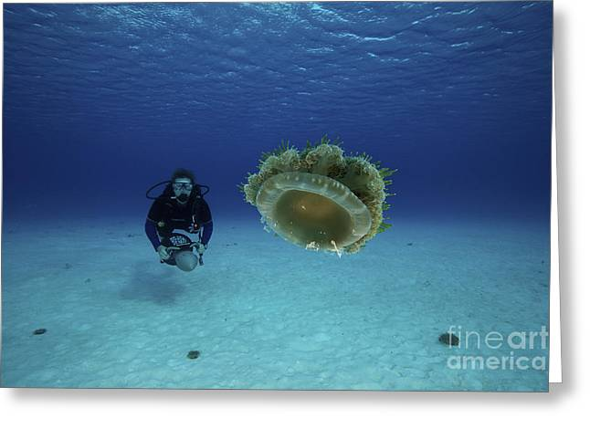 Medusozoa Greeting Cards - A Scuba Diver Gets A Close-up Look Greeting Card by Terry Moore