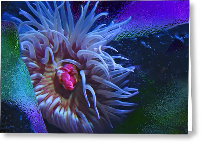 A Sea Anemone Greeting Card by Natalya Shvetsky