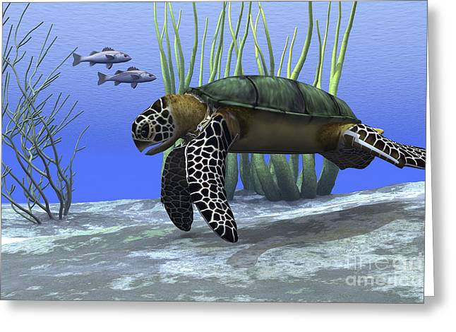 Sea Life Digital Art Greeting Cards - A Sea Turtle Makes Its Way Greeting Card by Corey Ford