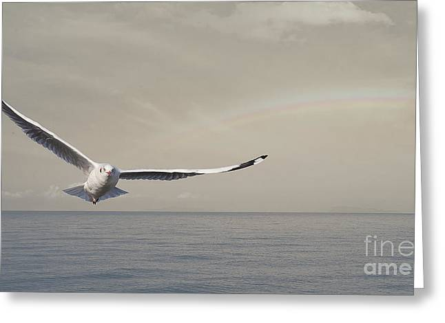 Baptize Greeting Cards - A seagull Greeting Card by Anek Suwannaphoom