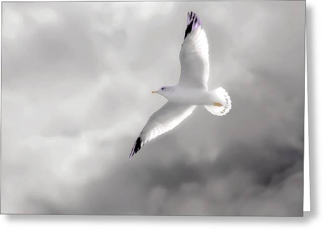 Tom York Images Greeting Cards - A Seagull In The Clouds Greeting Card by Tom York Images
