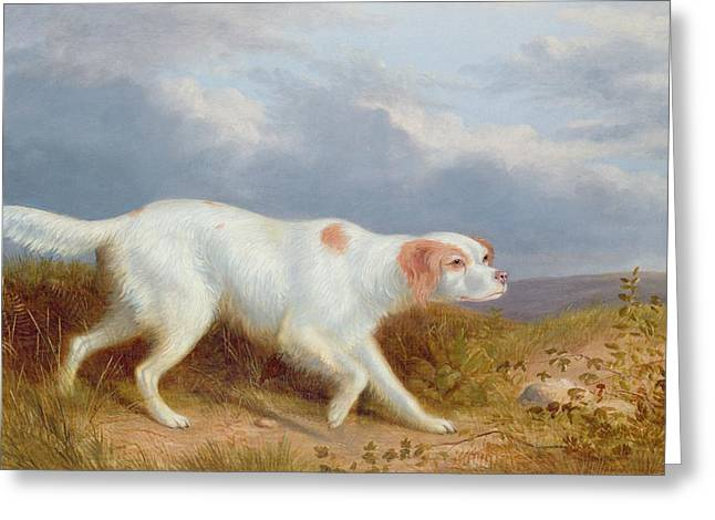 Dog Walking Greeting Cards - A Setter on the Moor Greeting Card by Philip Reinagle