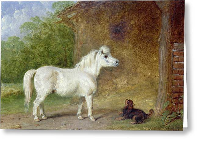 Spaniel Greeting Cards - A Shetland pony and a King Charles spaniel Greeting Card by Martin Theodore Ward