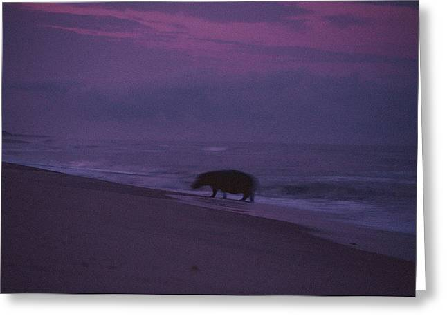 Surf Silhouette Greeting Cards - A Silhouetted Hippopotamus At Surfs Greeting Card by Michael Nichols