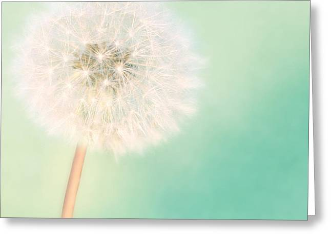 Wildflower Photos Greeting Cards - A Single Wish II Greeting Card by Amy Tyler