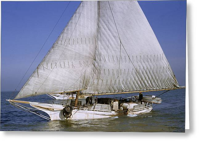 Two Fishing Men Greeting Cards - A Skipjack For Oyster Fishing Sails Greeting Card by Robert Sisson