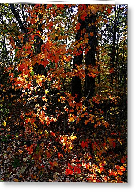 Turning Leaves Photographs Greeting Cards - A Slash of Sunlight Greeting Card by Julie Dant