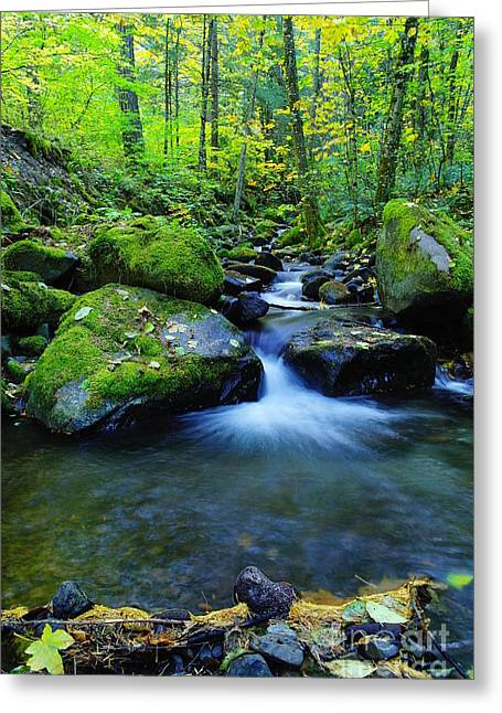 Water In Creek Greeting Cards - A Small Pool Opening Wide  Greeting Card by Jeff  Swan