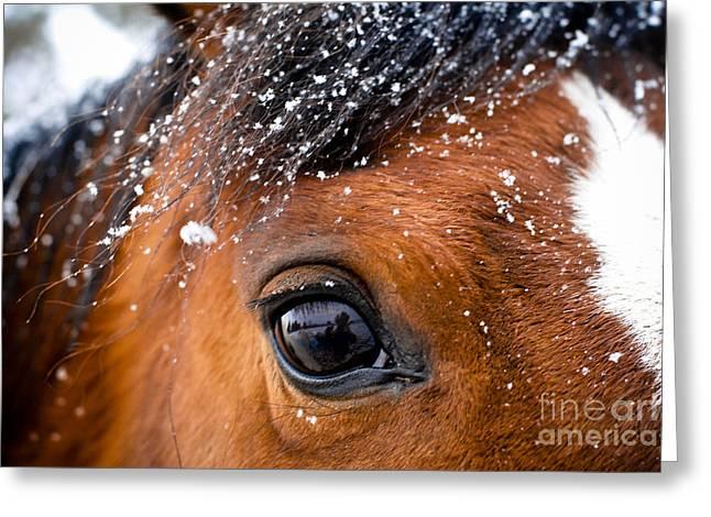A Snowy Eye Greeting Card by Leaetta Mitchell