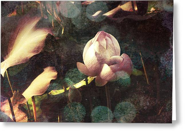Soft Tones Greeting Cards - A Soft Touch Greeting Card by Jessica Brawley