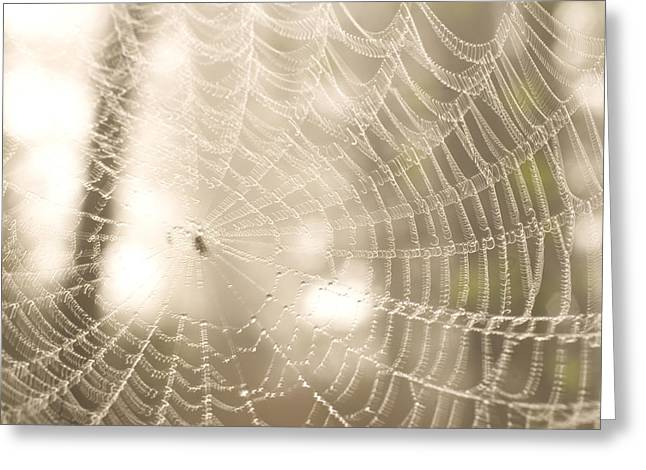 Spun Web Greeting Cards - A Spider Web Shows Up Against The Light Greeting Card by Phil Schermeister