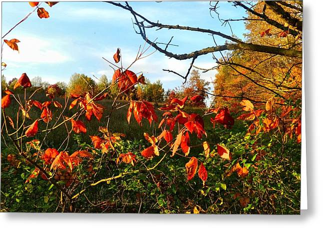 Julie Riker Dant Photography Greeting Cards - A Splash of Red II Greeting Card by Julie Dant