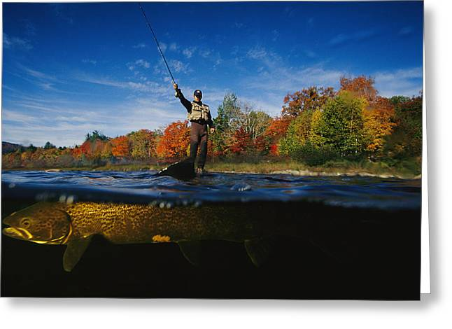 Aquatic Split Level Views Greeting Cards - A Sport Fisherman And His Atlantic Greeting Card by Paul Nicklen