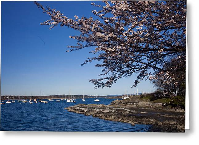 Boats On Water Greeting Cards - A Spring Day With Blossoms Covering Greeting Card by Taylor S. Kennedy