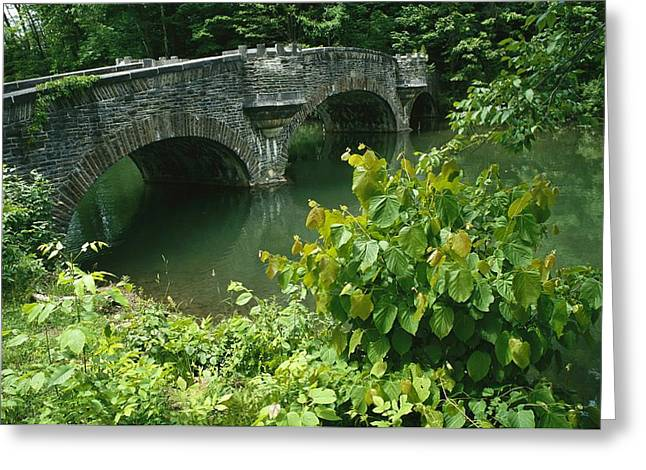 Cooperstown Greeting Cards - A Stone Bridge Crosses The Headwaters Greeting Card by Raymond Gehman