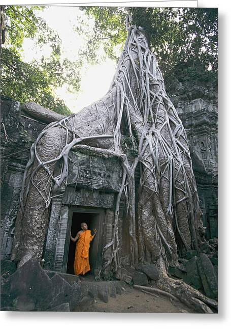Tree Roots Photographs Greeting Cards - A Strangler Figs Gnarled Roots Creep Greeting Card by Paul Chesley
