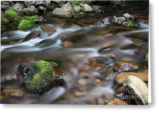 Babbling Greeting Cards - A Stream In Nova Scotia Greeting Card by Ted Kinsman