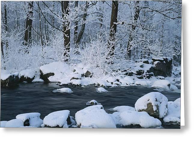 Woodland Scenes Greeting Cards - A Stream Running Through Snowy Woodland Greeting Card by Mattias Klum