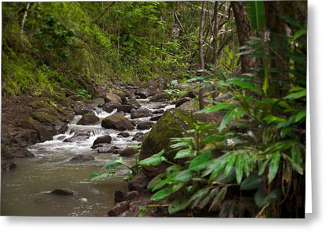 Lush Green Greeting Cards - A Stream Runs Through A Tropical Jungle Greeting Card by Taylor S. Kennedy