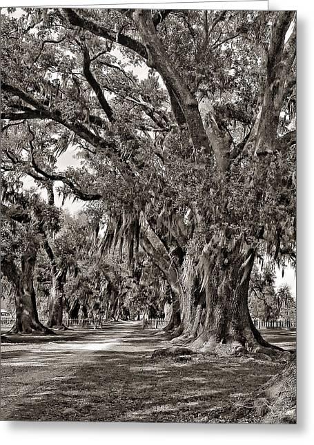 Evergreen Plantation Photographs Greeting Cards - A Stroll Through Time monochrome Greeting Card by Steve Harrington