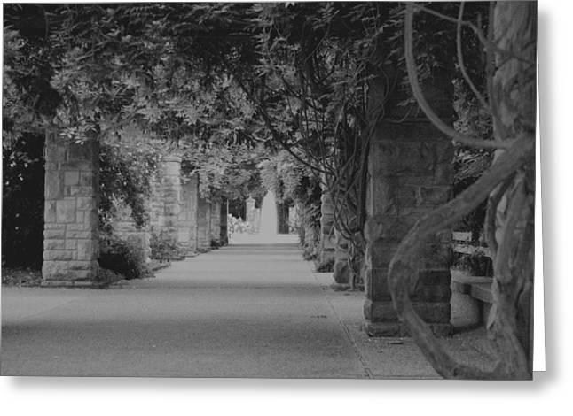 Lynnette Johns Greeting Cards - A Stroll Under The Vines BW Greeting Card by Lynnette Johns
