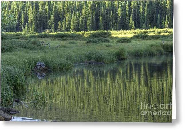Willow Lake Greeting Cards - A Study In Green Greeting Card by David Bearden