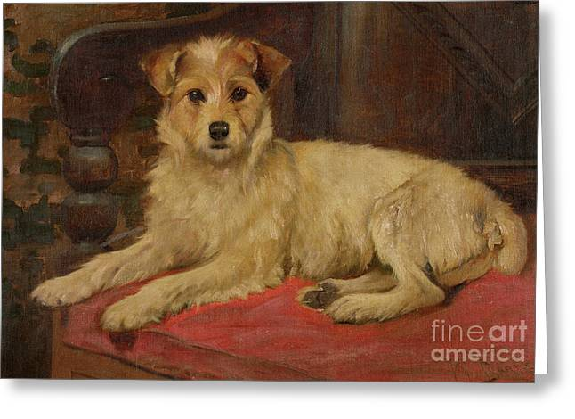 Cushion Paintings Greeting Cards - A Terrier on a Settee Greeting Card by Wright Barker