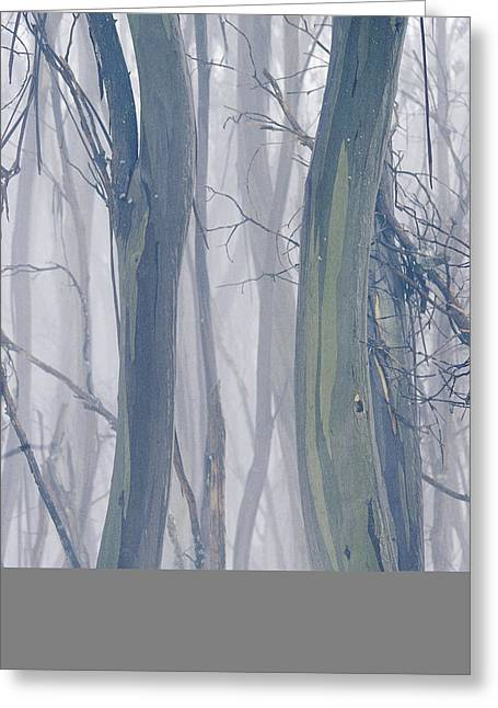 Park Scene Greeting Cards - A Thicket Of Gum Trees In A Snowy Greeting Card by Jason Edwards