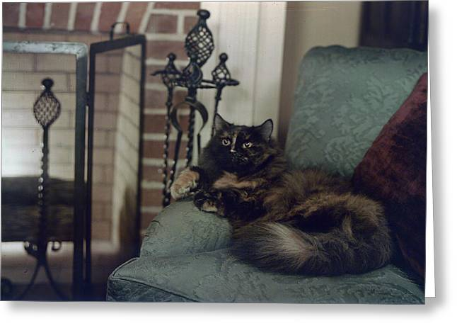 Period Greeting Cards - A Tortoiseshell Persian Cat Reclines Greeting Card by Willard Culver
