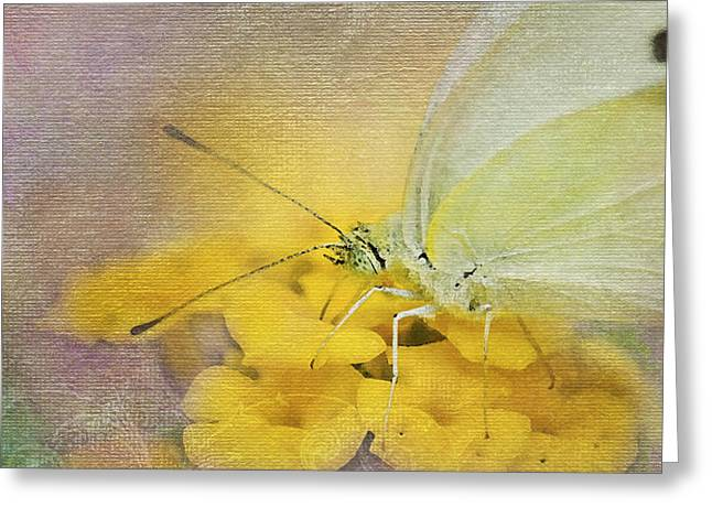 A Touch of Yellow Greeting Card by Betty LaRue