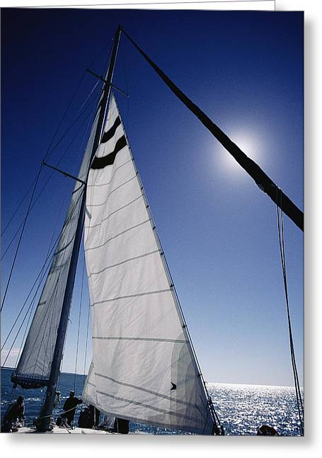 Shark Bay Greeting Cards - A Tourist Catamaran On Shark Bay Greeting Card by Jason Edwards
