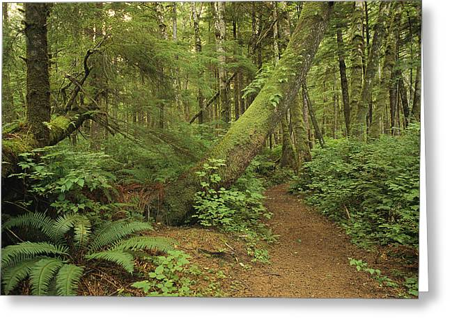 North Vancouver Greeting Cards - A Trail Cuts Through Ferns And Shrubs Greeting Card by James A. Sugar