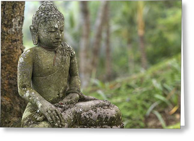 Lush Green Greeting Cards - A Tranquil Seated Buddha Statue Greeting Card by Justin Guariglia