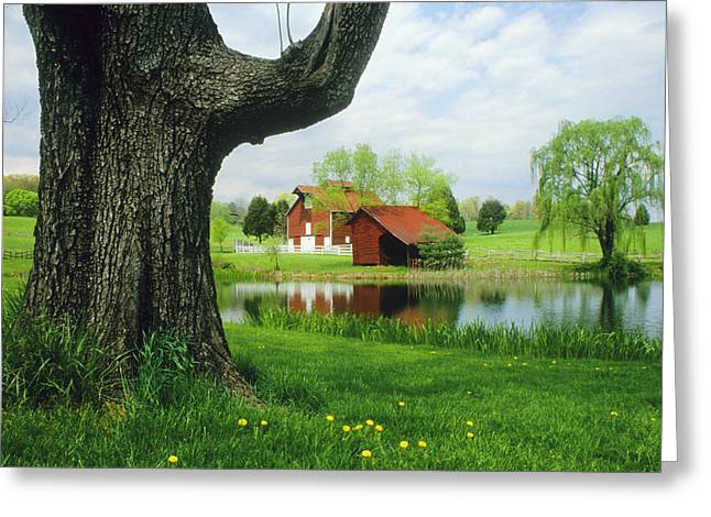 Rural Ways Of Life Greeting Cards - A Tree Frames A View Of A Farm Greeting Card by Annie Griffiths