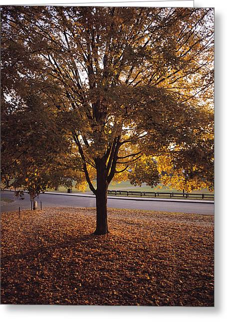 Hanover College Greeting Cards - A Tree In Autumn Foliage On The Grounds Greeting Card by Sam Abell
