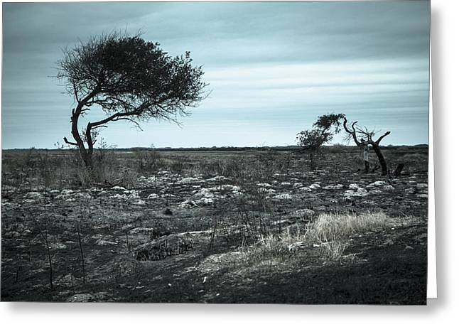 Texas Landscape Greeting Cards - A tree survived the Texas drought Greeting Card by Ellie Teramoto