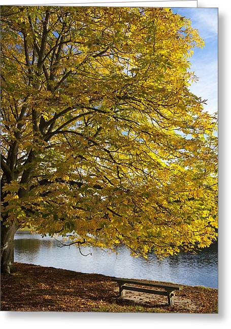 Fallen Leaf Lake Greeting Cards - A Tree With Golden Leaves And A Park Greeting Card by John Short