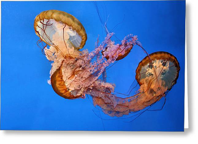 A Trio Of Jellyfish Greeting Card by Kristin Elmquist