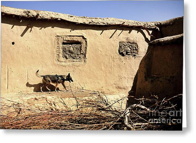 Zabul Greeting Cards - A U.s. Air Force K-9 Searches Greeting Card by Stocktrek Images