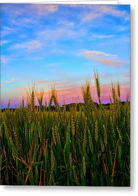 Field. Cloud Digital Art Greeting Cards - A View from Crop Level Greeting Card by Bill Tiepelman