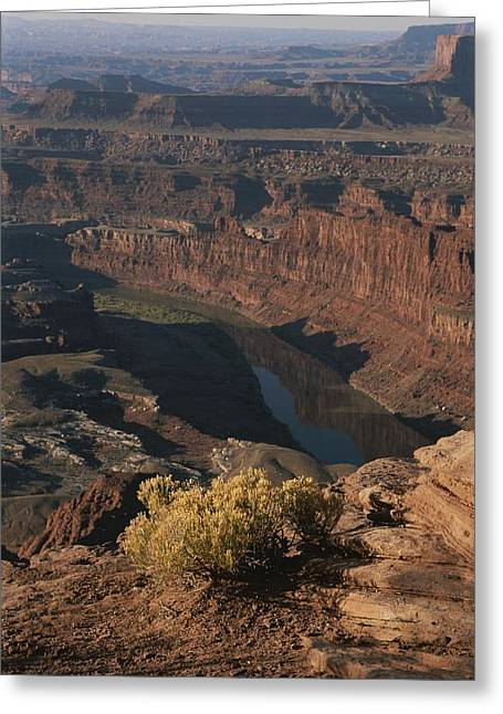 Park Scene Greeting Cards - A View From Dead Horse Point Greeting Card by Bobby Model