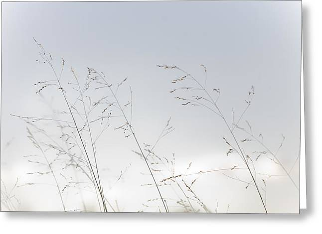 Finishing Greeting Cards - A View Of Brown Grasses On An Autumn Greeting Card by Taylor S. Kennedy