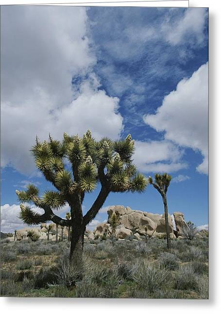 Park Scene Greeting Cards - A View Of Joshua Trees And Rock Greeting Card by Marc Moritsch