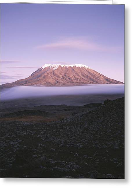 Volcano Greeting Cards - A View Of Snow-capped Mount Kilimanjaro Greeting Card by David Pluth